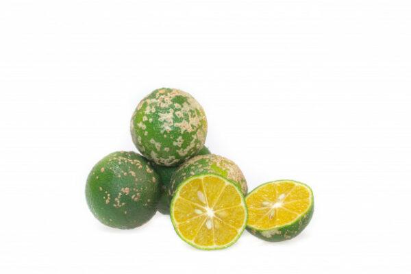 Limon mandarino